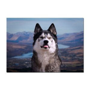 39df0fc62 Product tags malamutes | Designed by Boo