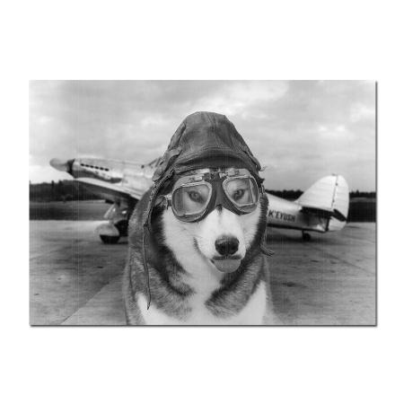 husky pilot photo print
